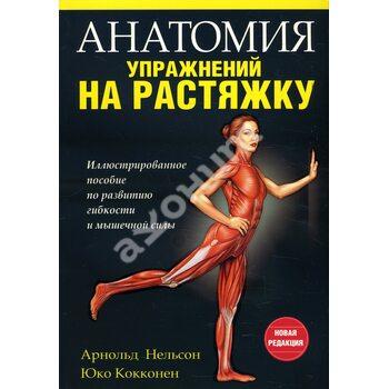 Анатомія вправ на розтяжку